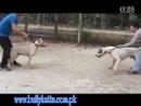 Булли Кутта vs Гуллтерр