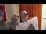 Когда у твоего попугая хорошее настроение