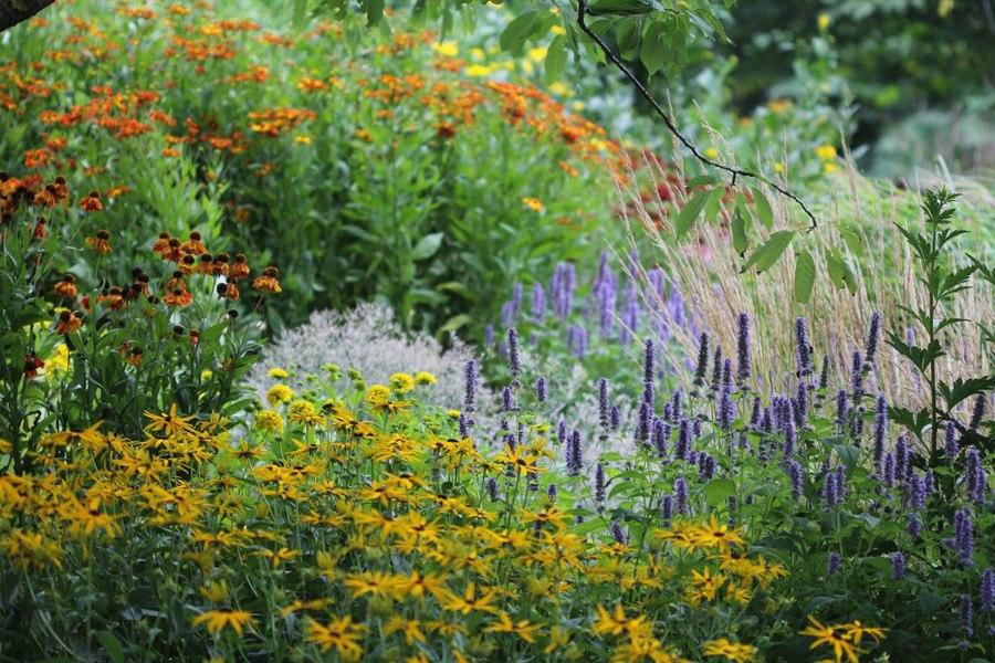 Многолетники для Ваших цветников - красивый цветник из многолетников