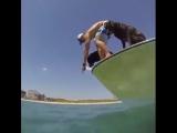 Good boy doggo fishing for underwater crawley nopes