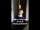 Танцуют все Под песню Сидр Сидорович Глюк от Летающих зверей =
