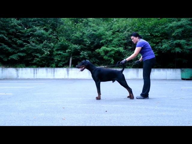 Show training Makar v Venzoland 10 mon