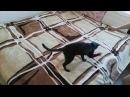 Кот и пушистик байла