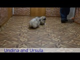 Undina and Ursula
