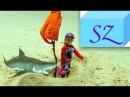 Акула нападает на Парусный Корабль из Песка