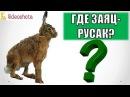 Где и Как Искать Зайца-Русака на Охоте Videoohota