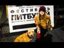 Фестиваль питбулей 06.01.2017 собаки убийцы, какие они есть