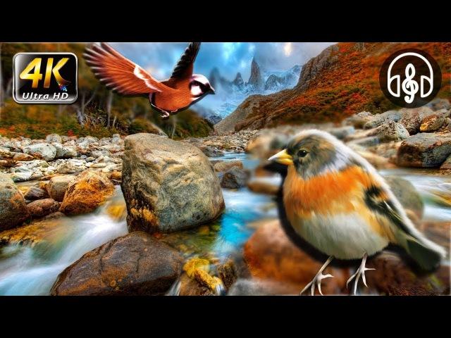Успокаивающая музыка для сна детей. Белый шум горной реки. Пение птиц.