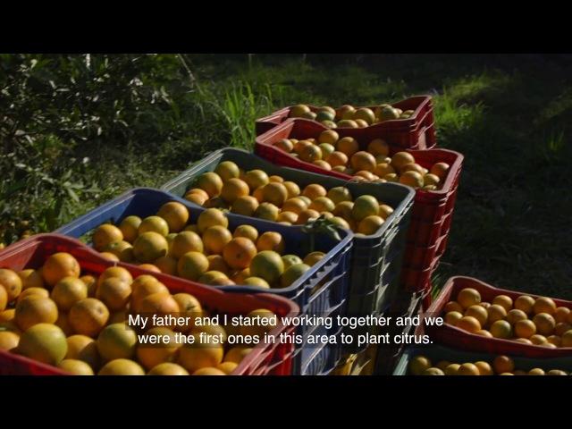Дикий апельсин (Бразилия)