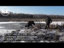 Застрявшего во льдах лося спасли милиционеры в Беларуси