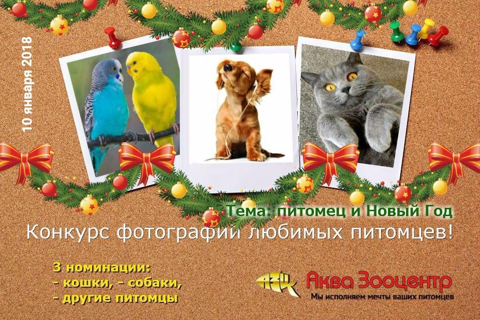 Новогодний конкурс фотографий питомцев в Аква Зооцентр