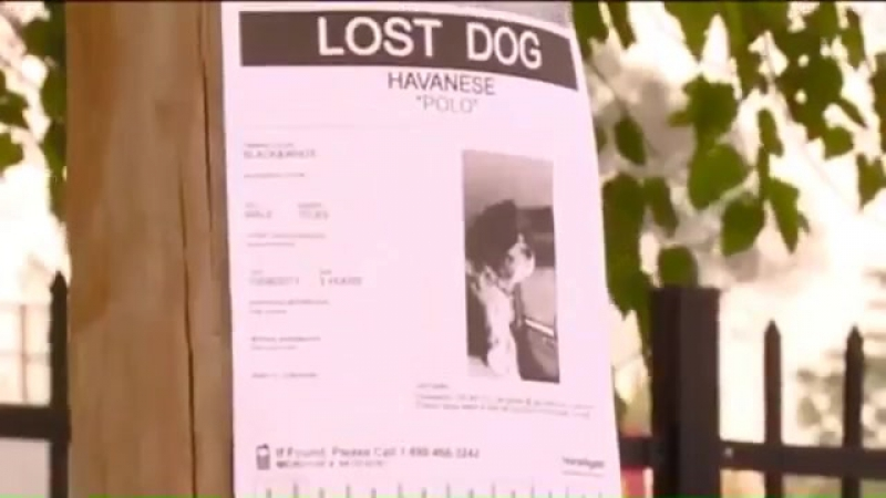 Dad's tearful reunion with therapy dog Polo taken in carjacking