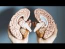 ТЕСТ на определение доминирующего полушария мозга