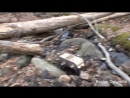 Смешная озвучка жизнь роботов смешная нарезка лучших видео BostonDynamics 4