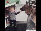 Собака друг, а друга нужно кормить! ?