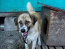 Собаки приюта Лучший друг 3