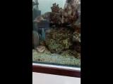 Морской аквариум)