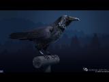 РАЙМ x Black Raven