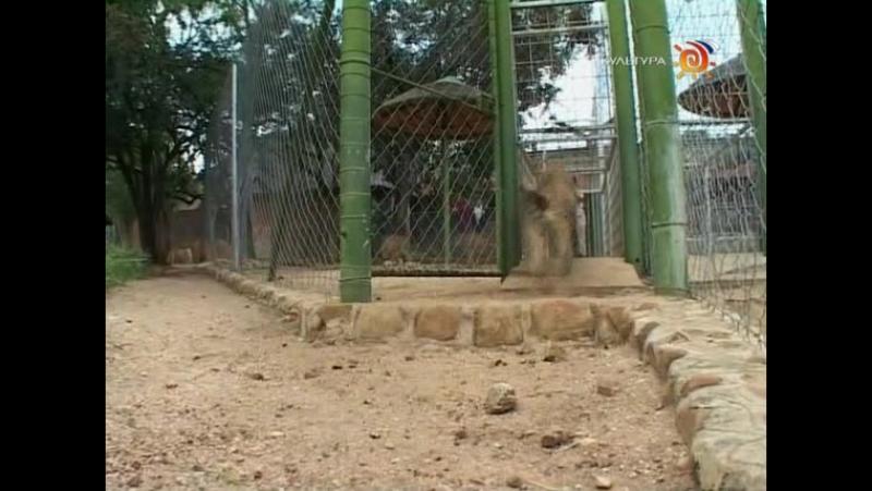 Animal Planet. Человек и львы (1-3 сезоны: 1-43 серии из 43) / The Lion Man / 2004-2008 /07