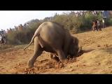 11 часов подряд несчастная слониха рыла землю. От того, что произошло, ком в горле!