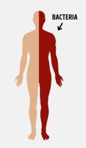 Наше тело