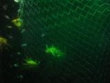 Они помогут быстро избавиться от рыбы в сетях, и любой другой мертвой органики в Байкале