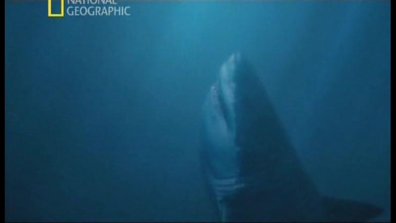 Доисторические хищники. Акула-чудовище.
