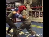Маленькие боксеры // STRONG DIVISION