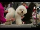 Видео к фильму «Выставочные собаки» (2018): Трейлер (русский язык)