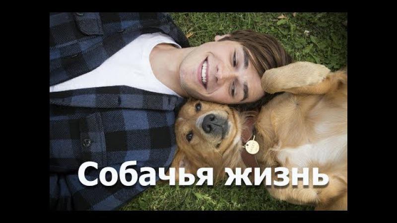 Собачья жизнь (2017) Фильм про собаку