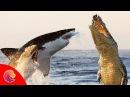 Cá Sấu Nước Mặn đại chiến với Cá Mập ai sẽ là người chiến thắng