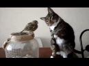 Смешные приколы видео котиков!самые веселые кошки!
