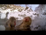 GoPro: Snow Monkey Hot Tub