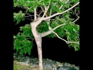 Необычная Эротика - Эротика В природе