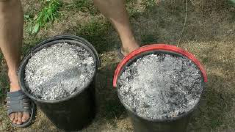 Закапываем золу на винограднике