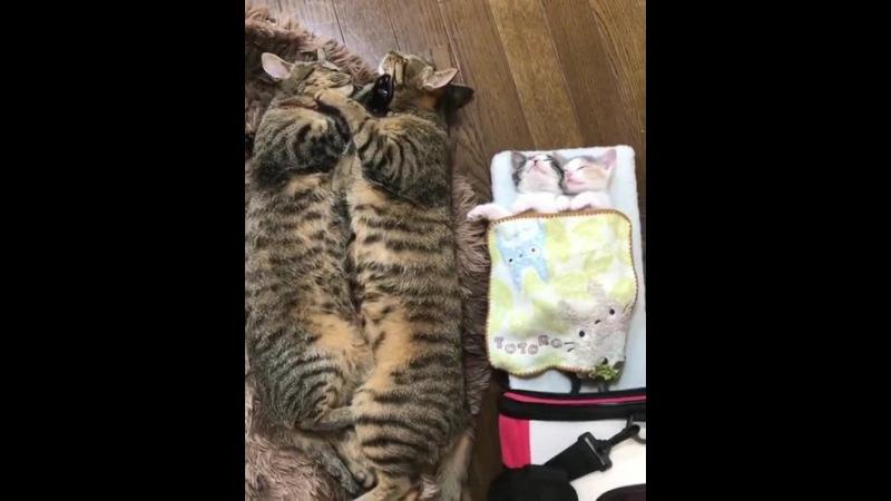 Cats Dream · coub, коуб