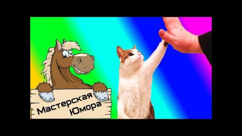 🐎 КОТ - БРО (18)   Мастерская Юмора   ПРИКОЛЫ 2017 ДЕКАБРЬ   Лучшая Подборка Приколов 79