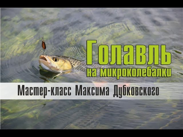 Голавль на микроколебалки. Мастер-класс Максима Дубковского