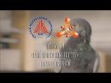 Кубок Первокурсника ЮФУ 2017 (Юрфак)