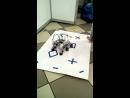 робот помощник
