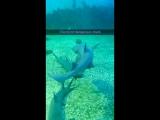 Sharks Azov