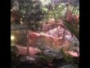 Океанариум Крокус Сити Холл (джунгли)