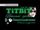 Хаски Флора TiTBiT Собаки в нашей жизни Интервью 0 Золотистый Ретривер Тизер