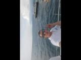 яхта с макси райс