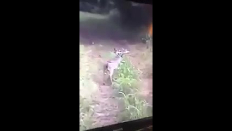 4ch VIDEO