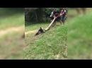 Anaconda VS Dog Real Fight