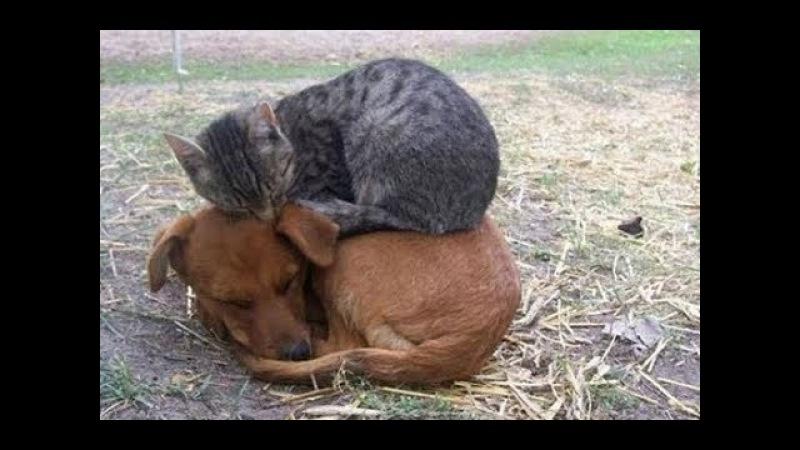 Смешные видео про кошек до слез Смешные кошки и коты 2018 2 (Кошки Без монтажа)