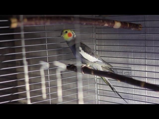 Птиц-синиц