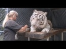 A TIGER CLOSE UP LIKE YOUVE NEVER SEEN BEFORE YES THEY HAVE A SOUL TOO JUST LIKE YOU AND ME