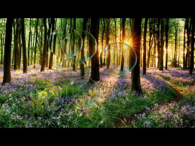 Утреннее пение соловья звуки природы Пение птиц Morning singing nightingale of birds singing